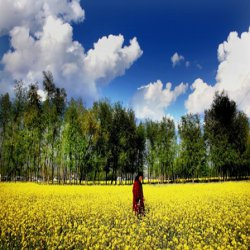 Low cost Kashmir tour packages for families and couples