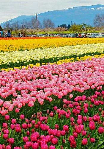 Kashmir Tour Packages with price