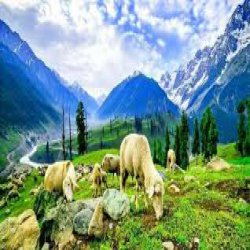Best Time and season to visit kashmir