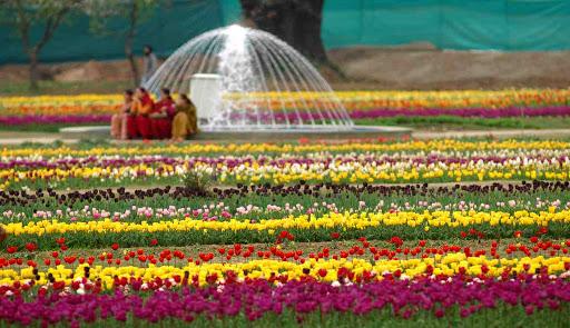 locals refreshing their best time in Indira Gandhi memorial tulip garden